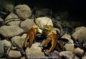 Crayfish Park of Cilento Italy by Salvatore Ianniello