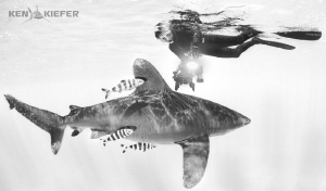 Lovely Ellen enjoying a beautiful oceanic Whitetip by Ken Kiefer