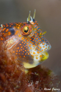 Tiny colorful disguise by Raoul Caprez