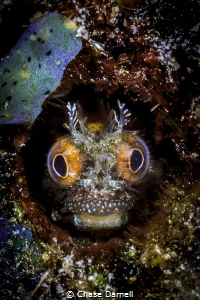 """Vision""