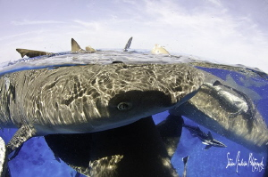 I love safety stops and clear water, that enables me to g... by Steven Anderson