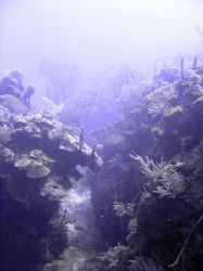 Coral garden with loads of swim throughs taken near Guard... by Ian Smith