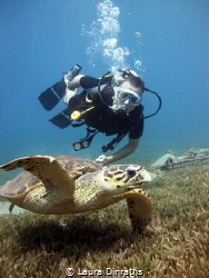 Diver and friendly male Hawksbill turtle over seagrass by Laura Dinraths