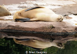 A seal bathes in the sun. by Brian Heagney