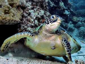 Just take off - the Green Turtle finished the photoshooting by Andre Philip