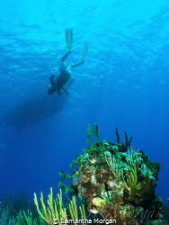 3rd safety stop of the day. East End wall, Grand Cayman. ... by Samantha Morgan