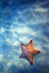 Starfish: Peter Island by Sarena Straus
