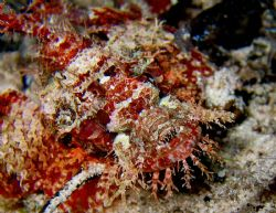 Scorpionfish at Wakatobi Reef by Beate Krebs