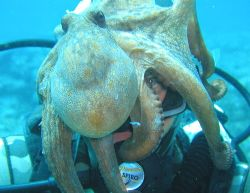 On a nice afternoon dive, we found extremely friendly oct... by Eugen Miljan