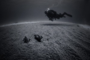 The scuba diver is moving over the sandy bottom in shallo... by Dmitry Starostenkov