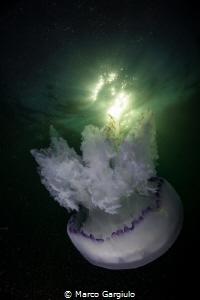 Jellyfish by Marco Gargiulo