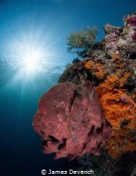 Pretty reef, nice sunburst. Enough said! by James Deverich
