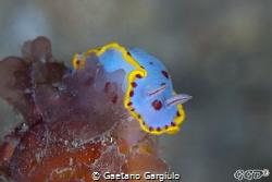 """Feeling blue"" by Gaetano Gargiulo"