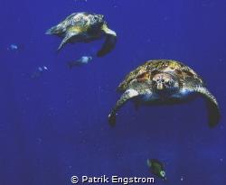 """""""Turtle highway"""" by Patrik Engstrom"""
