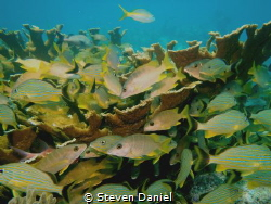 Somberro Reef Marathon Key by Steven Daniel