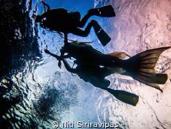 My little mermaid project by Niti Siriravipas