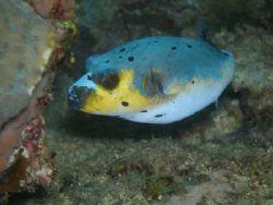 Popperfish by Ernesto Yu