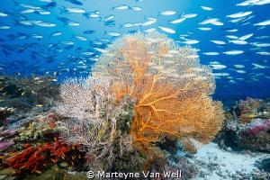 The Aquarium by Marteyne Van Well
