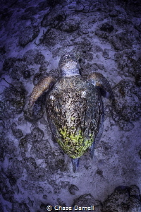 Loggerhead Encounter, Lighthouse Point Dive Site by Chase Darnell