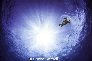 """""""Blue Planet"""" Hawksbill Turtle busting some tricks for t... by Chase Darnell"""