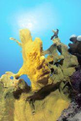 ....Waiting for food Picture was taken in Cebu Island N... by Depaulis Carlo