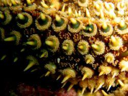 Starfish detail, Little Barrier Island, New Zaland by Jayne Dennis