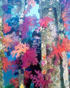 Red Sea by Ian Chapman