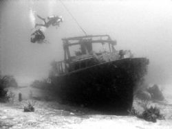 Theo's Wreck in the Bahamas. First wreck dive and what an... by Kelly N. Saunders
