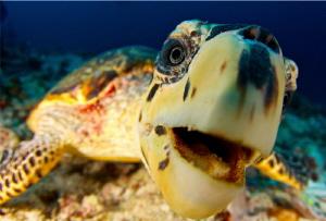 Hungry turtle by Doris Vierkötter