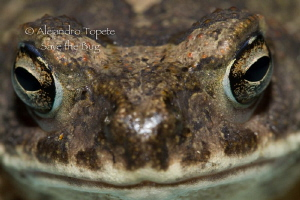 Frog close up by Alejandro Topete