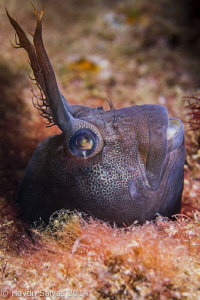 Love these gobies that just pop their head out of holes i... by Haydn Salvas