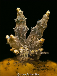 Twin towers -