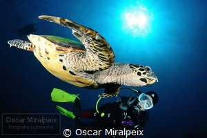 turtle ... by Oscar Miralpeix