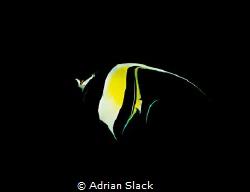 The spotlight's on the idol by Adrian Slack