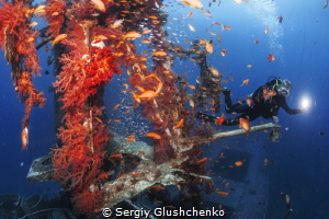 wreck-colors by Sergiy Glushchenko