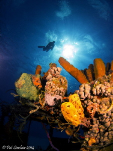 On top of the wheelhouse of the Doc Paulson wreck was a g... by Patricia Sinclair