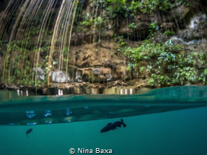 Attendant - little Rhamdia Catfish,Ik Kil Cenote, Yucatan. by Nina Baxa
