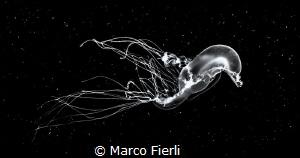 Deep Space Swim Mono conversion of a planktonic creature... by Marco Fierli