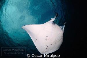 manta by Oscar Miralpeix