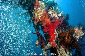 Happy lion fish at Cedar's pride wreck. by Mehmet Salih Bilal