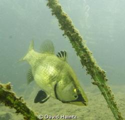 Lake Eacham, Queensland, Canon 7D, 10-22mm lens, Nimar ho... by David Haintz