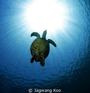 turtle by Jagwang Koo