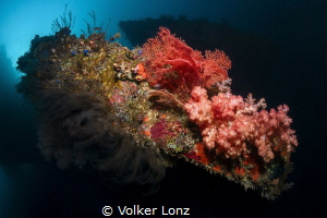 Diving at the Liberty Wreck – pic 002 by Volker Lonz