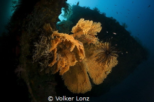 Diving at the Liberty Wreck – pic 003 by Volker Lonz