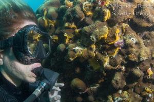 diver with Reef, Veracruz Mexico by Alejandro Topete