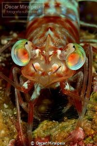 colourful eyes by Oscar Miralpeix