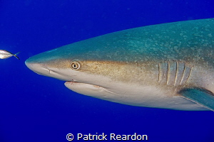 Shark with an interesting skin texture. by Patrick Reardon