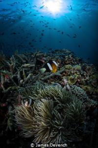 Sunburst over anemone by James Deverich