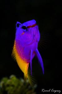 Colourful encounter by Raoul Caprez