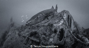 Guardian of the Wreck